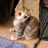 Adopt A Pet :: BUNNY - Los Angeles, CA