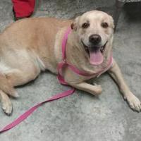 Adopt A Pet :: Sammy - Paducah, KY