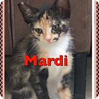 Adopt A Pet :: Mardi - San Fernando Valley, CA