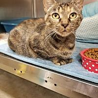 Adopt A Pet :: April - Duluth, GA