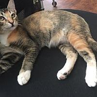 Adopt A Pet :: ZoeC - North Highlands, CA