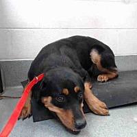 Adopt A Pet :: MARTHA - Albuquerque, NM