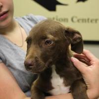 Adopt A Pet :: 36526926 - Cleveland, AL
