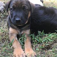 Adopt A Pet :: Nora - Little Rock, AR