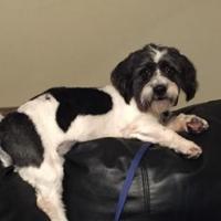 Adopt A Pet :: Yancey - Richmond, VA