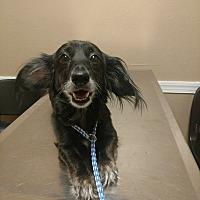 Adopt A Pet :: Jill - Lakeland, FL