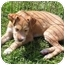 Photo 3 - Wirehaired Fox Terrier Puppy for adoption in Brodheadsville, Pennsylvania - Lacy