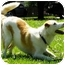 Photo 1 - Jack Russell Terrier/Australian Cattle Dog Mix Dog for adoption in Bellevue, Nebraska - Red Dog