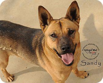 German Shepherd Dog/Shepherd (Unknown Type) Mix Dog for adoption in Bolivar, Tennessee - Sandy