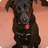 Adopt A Pet :: Gypsie - Newcastle, OK