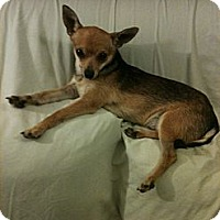 Adopt A Pet :: Dylan - Winchester, CA