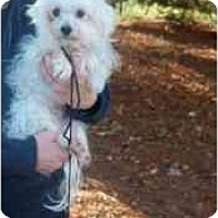 Adopt A Pet :: ANNIE - Rossford, OH