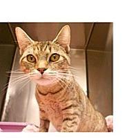 Adopt A Pet :: Gherkin - Maywood, NJ
