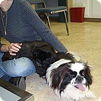 Adopt A Pet :: Bessie & Puggy - Richmond, VA