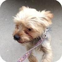 Adopt A Pet :: Harley - Orange, CA