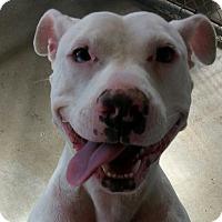 Adopt A Pet :: Dutchess - Russellville, KY
