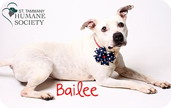 American Pit Bull Terrier Mix Dog for adoption in Covington, Louisiana - Bailee