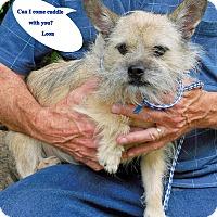 Adopt A Pet :: Leon - Franklinton, NC