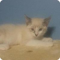 Adopt A Pet :: Timmy - McDonough, GA