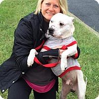 Adopt A Pet :: Kane - nashville, TN