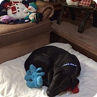 Adopt A Pet :: Francois - Evergreen, CO