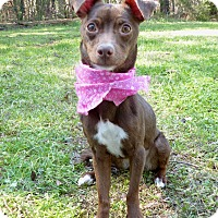 Adopt A Pet :: Maple - Mocksville, NC