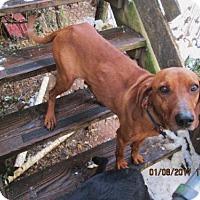 Adopt A Pet :: LUCY - South Burlington, VT