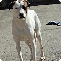 Hound (Unknown Type) Mix Dog for adoption in Mission, Kansas - Roxy