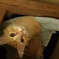 Adopt A Pet :: Cheeto - San Jose, CA