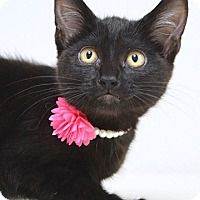 Adopt A Pet :: Emily - Dublin, CA