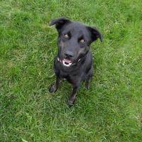 Adopt A Pet :: Bianca - Fairfield, IA