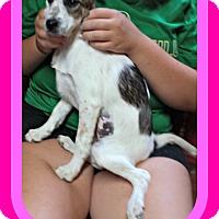 Adopt A Pet :: ASHLEY - New Brunswick, NJ