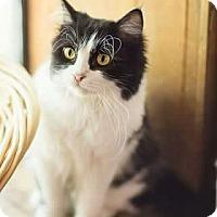 Adopt A Pet :: Queen Latifah - Ennis, TX