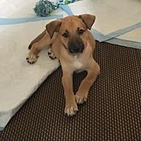 Adopt A Pet :: Chrissy Wimbledon - Alpharetta, GA