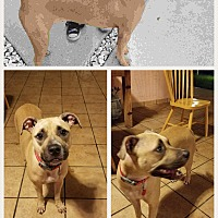 Adopt A Pet :: Lily - Homestead, FL