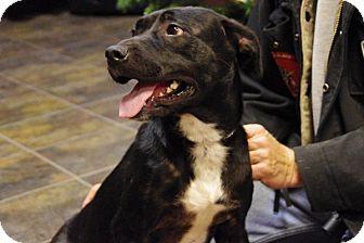 Labrador Retriever Mix Dog for adoption in Elyria, Ohio - Sarah-Prison Graduate