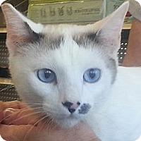 Adopt A Pet :: Malai - Pasadena, CA
