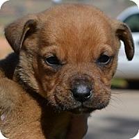 Adopt A Pet :: Zeb - Athens, GA