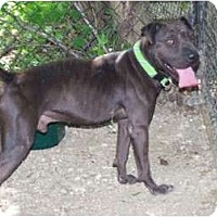 Adopt A Pet :: Tickles WONDERFUL BOY - Antioch, IL