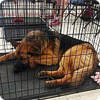 Adopt A Pet :: Benson - Centerpoint, IN
