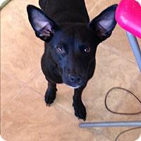 Adopt A Pet :: Pepper - Pointblank, TX