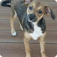 Adopt A Pet :: Genny - Richmond, VA