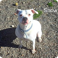 Adopt A Pet :: Snow - Yreka, CA