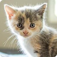 Adopt A Pet :: Tina     170901 - Atlanta, GA
