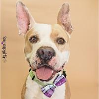 Adopt A Pet :: Dovakin - Phoenix, AZ