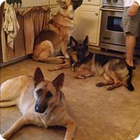 Adopt A Pet :: Leiben (Guest - Roswell, GA