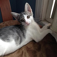Adopt A Pet :: Geoffrey - Whitehall, PA