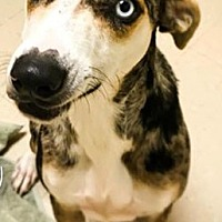 Adopt A Pet :: Violet- located in MA - Hagerstown, MD