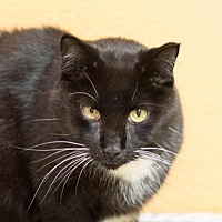 Adopt A Pet :: Zorro - Fargo, ND