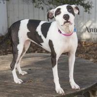 Adopt A Pet :: Annabelle - West Des Moines, IA